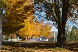 Eden Village Foliage