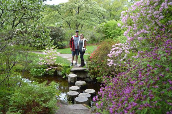 Asticou Gardens Northeast Harbor, Maine