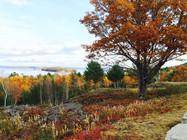 Paradise Hill Acadia