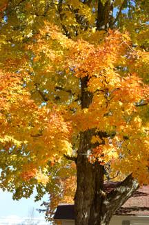 Autumn at Eden Village 2