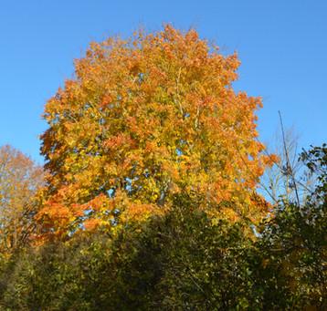 Autumn in Acadia