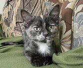 Tybee the Cat