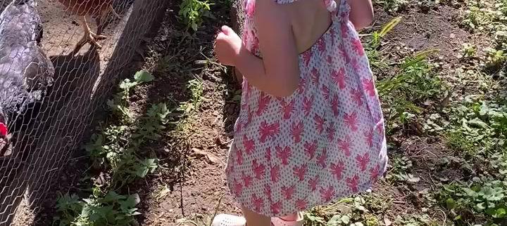 Cool chicken video