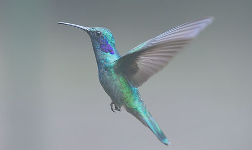 hummingbird-2139279_1920_edited.jpg