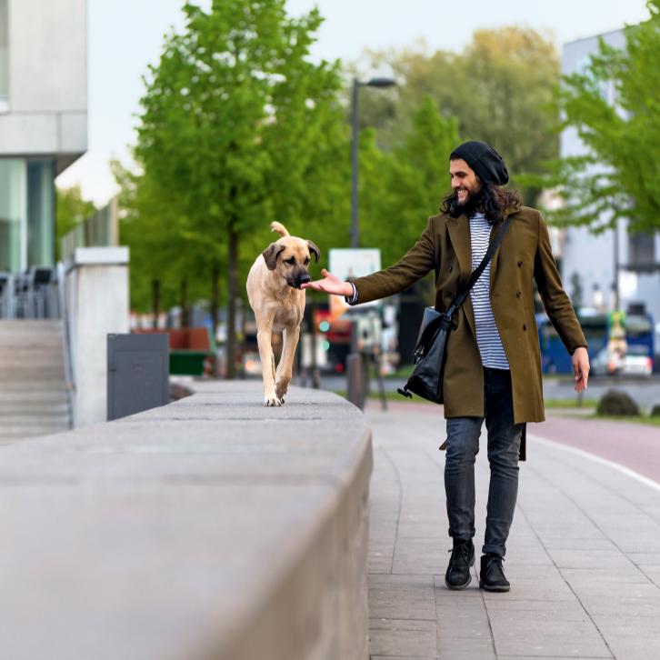 Sei höflich zu Deinem Hund - Kommunikation auf Augenhöhe