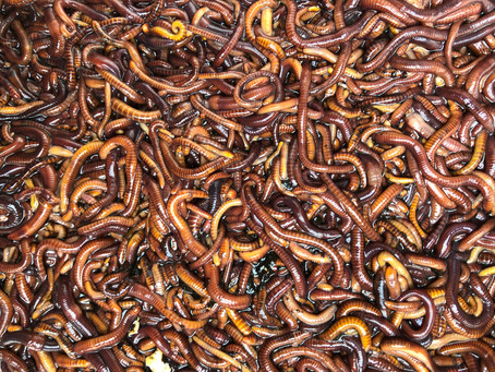 How Worms Will Save the Planet