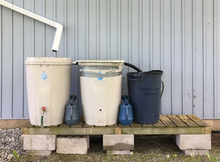 Rainwater is What Your Plants Really Want