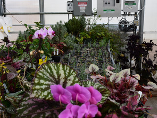 1/2 Price Plant Sale Set for May 12th