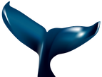 whale tail.png