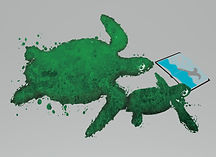turtles.jpg