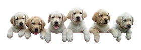 puppies.png