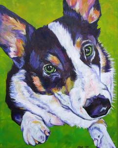 Signe's Pup