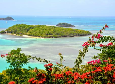 Entre Iguanes et Loup-Garou - Carnet de voyage en Martinique J3