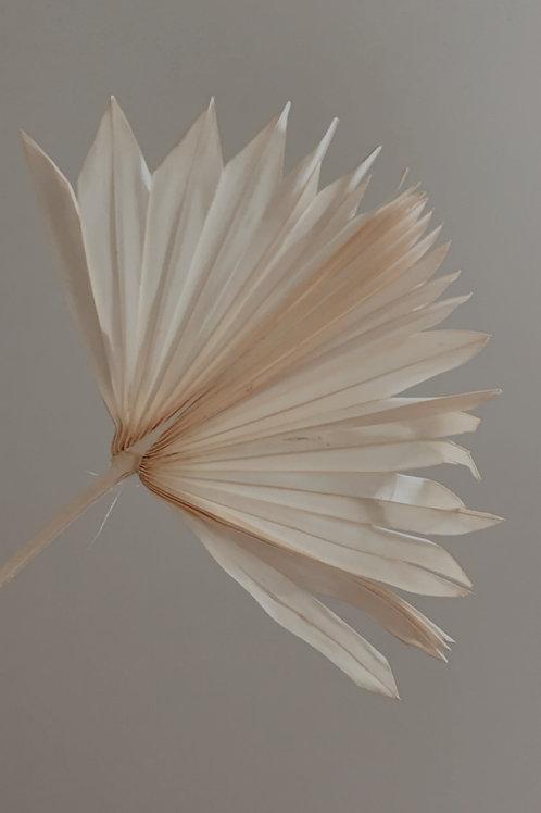 Palm White