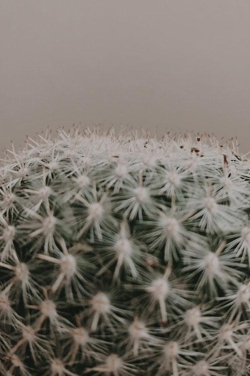 """Cactus 3.5"""" Assortment 2"""