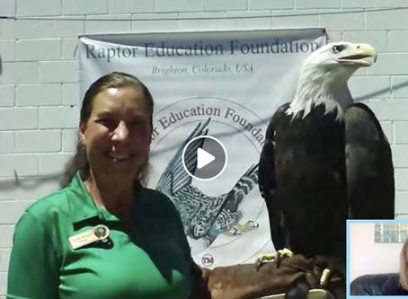 Nature Chat: Bald Eagle