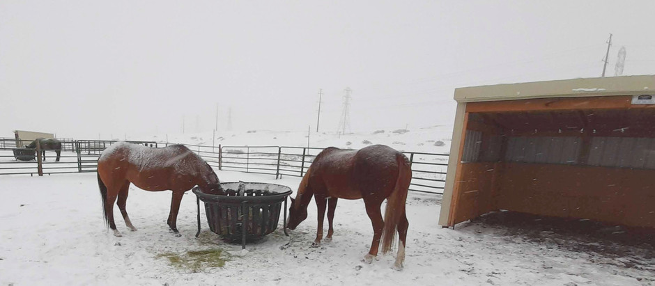 4 Ways Our Horses Stay Warm in the Winter