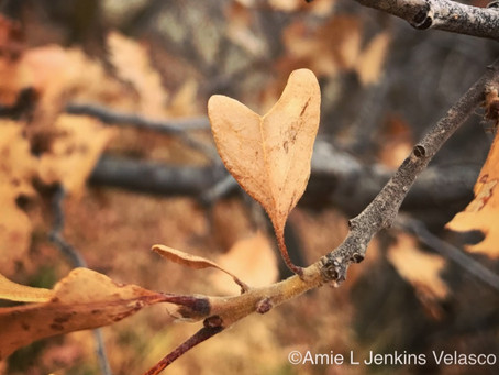 Found: Backcountry Hearts