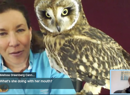 Nature Chat: Short-Earred Owl