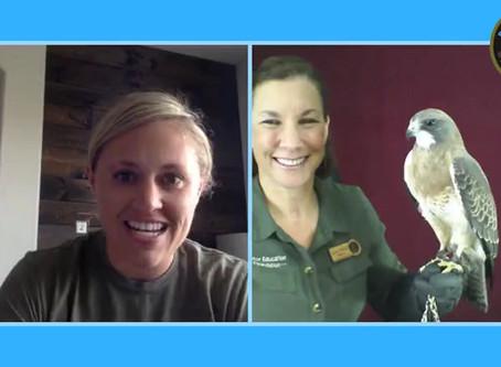 Nature Chat: Swainson's Hawk