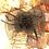 Thumbnail: black headpiece