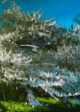 Sakura, Untitled #63 Tsuruoka, Yamagata Prefecture, Japan, 2020