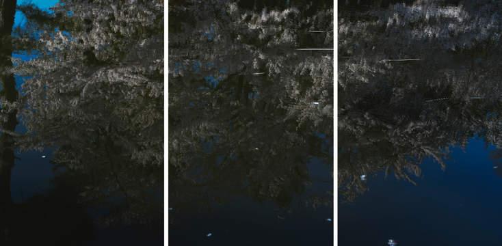 Sakura, Untitled #57 Tsuruoka, Yamagata Prefecture, Japan, 2020, triptych
