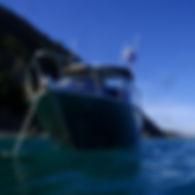 Diving Nelson NZ