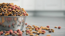Raw VS. Kibble - Which food is right for my pet?