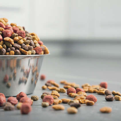 Do You Think Your Pet Has a Food Allergy?