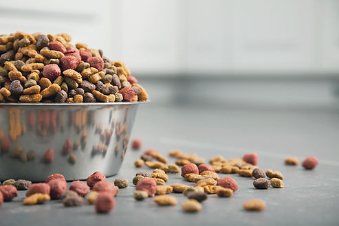Dog Vitamins And Mineral Supplements in a bowl