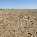 onions gone field.jpg