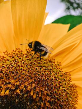 蜜蜂型企業