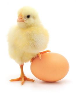 雞蛋的啟示