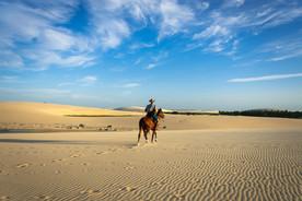 沙漠裡的千里馬