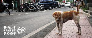 Bali Street Dogs Fund Australia