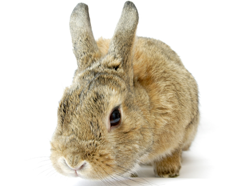 Swiss Government will stop selling cosmetics with ingredients tested on animals abroad.