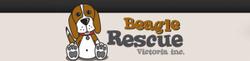 Beagle Rescue Victoria