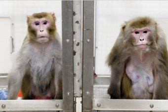 Animal Welfare groups call government's proposed cosmetic animal testing ban 'flawed.'