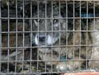 China's shocking dog and cat fur trade