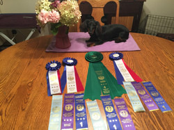 1st show ribbons