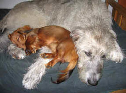 Sophie with pal Bess