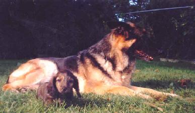 Rupert & Mercedes, Odessa ON