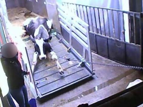Presemitteilung: Nach schlimmsten Tierschutzskandal Deutschlands