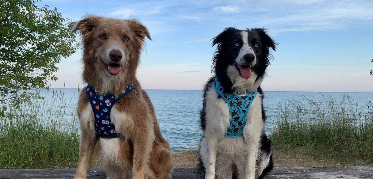 Smore's Harness & Sea's The Day Harness