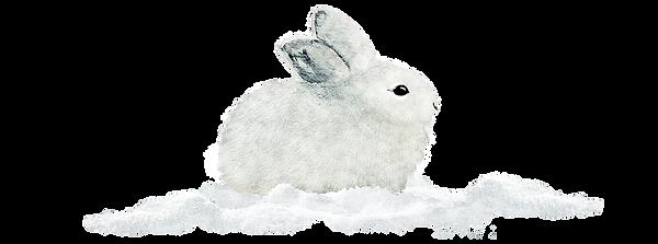 lapin des neiges calques.png