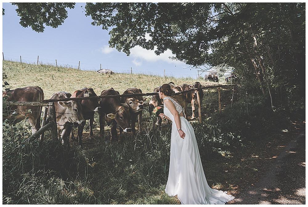 Braut und Kühe im Allgäu