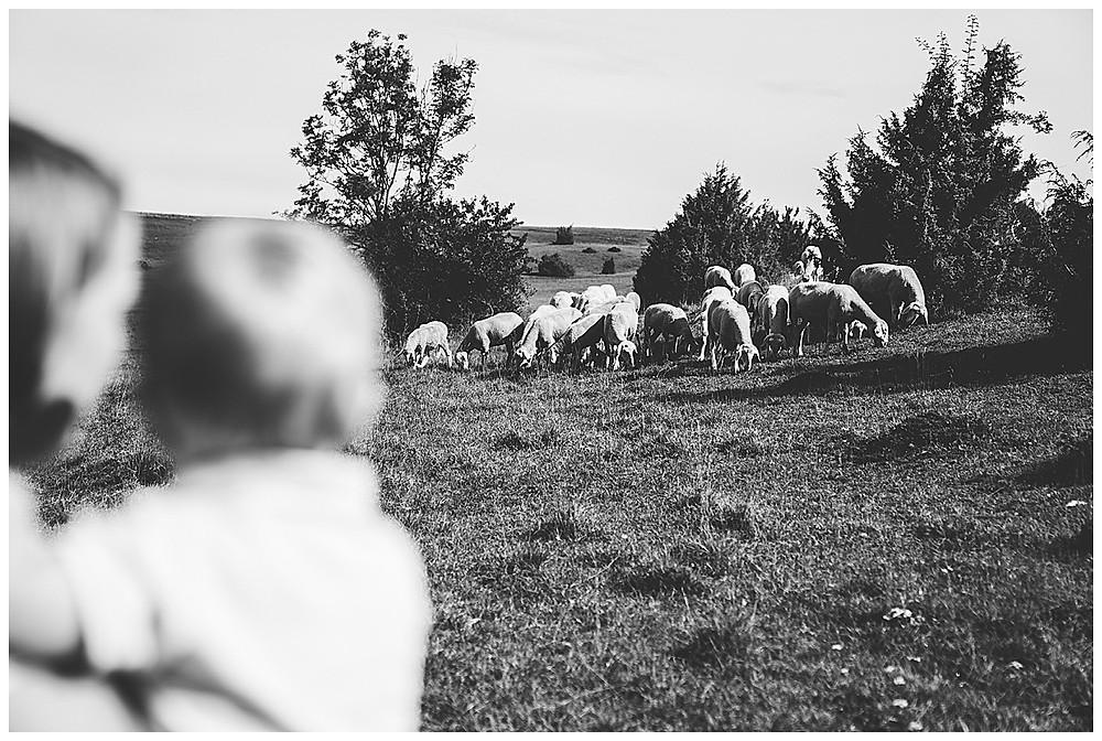 Mama und Sohn beobachten Schafe