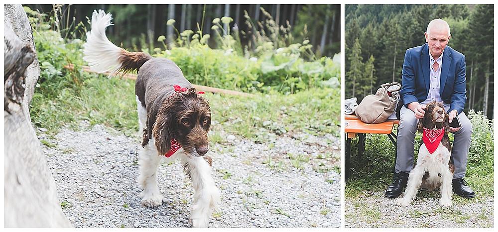Hochzeitsgast mit Hund sitzend auf der Bank auf der Alm