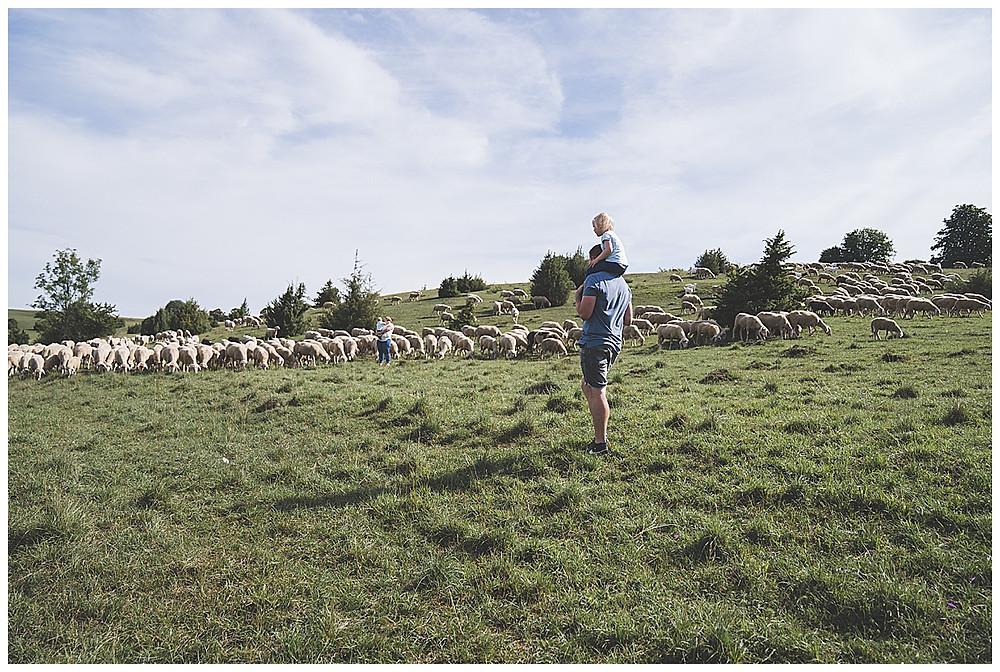 Familienshooting mit den Schafen